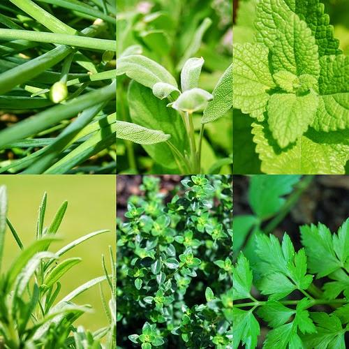 Herbs for Hemorrhoids